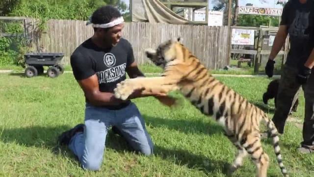 Ex-campeão dos pesados no UFC, Jon Jones brinca com tigre; vídeo