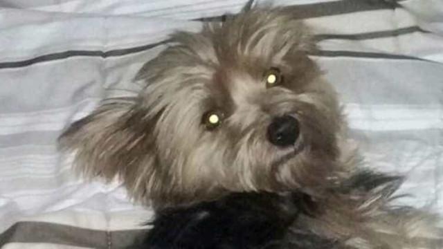 Samu demite equipe que salvou cão, volta atrás e dá apenas advertência