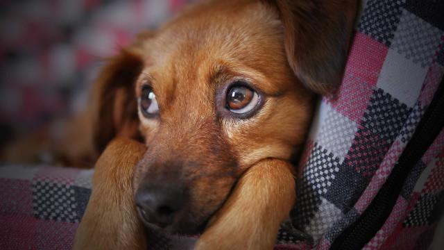 Fofura: cachorro e bebê assistem a vídeo juntos