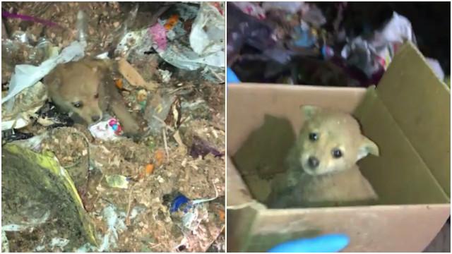 Grupo salva cãozinho soterrado em montanha de lixo no Uruguai