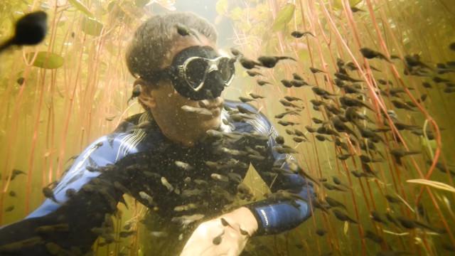 Mergulhador é surpreendido por milhares de girinos