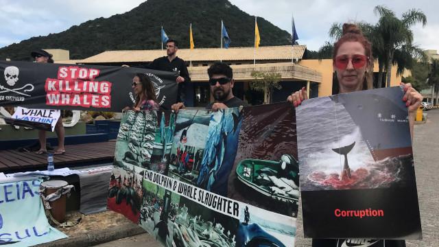 Proibição da caça comercial de baleias é mantida em reunião no Brasil