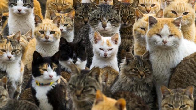 Ilha dos Gatos: conheça o lugar onde há mais felinos que humanos!