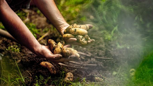 Projeto premiado cria quintais orgânicos em terras do fumo
