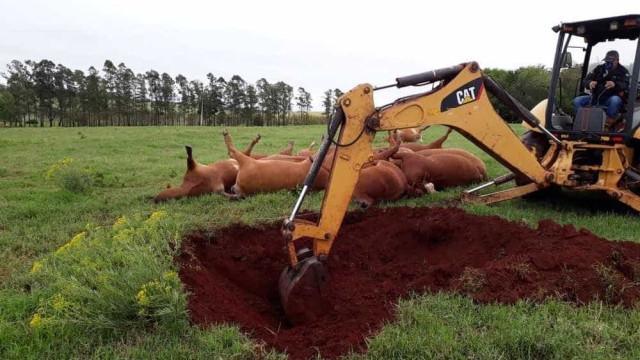 Queda de postes em temporal mata 18 vacas em fazenda no RS