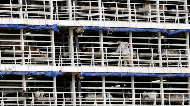 Por unanimidade, STF libera transporte de animais vivos em Santos
