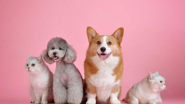 Como manter cães idosos saudáveis