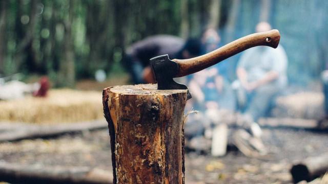 PF combate fraudes em sistema de controle e exploração de madeira
