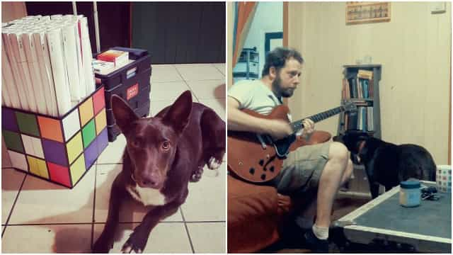 O sonho deste cão é ser vocalista de uma banda de rock