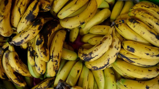 Apreendidas mais de cinco toneladas de cocaína escondidas em bananas
