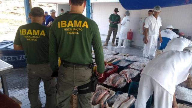 Ibama apreende 166 toneladas de peixe e fecha frigoríficos no Amazonas