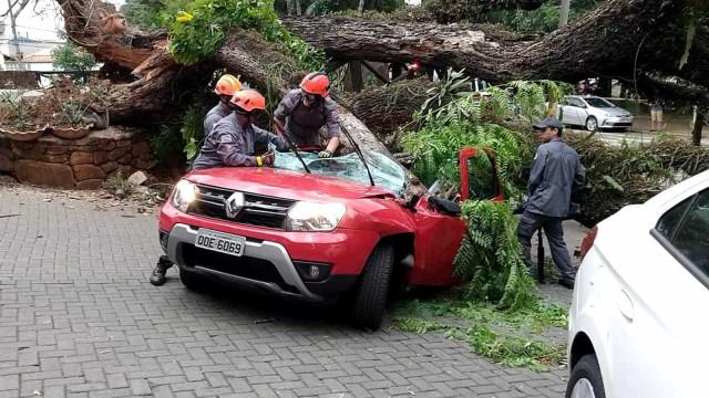Homem é atingido por árvore pouco depois de dizer que ela era perigosa