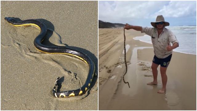 Vídeo mostra homem com cobra altamente venenosa em praia