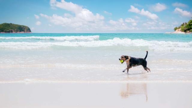 Morador se recusa a tirar cachorro da areia e é multado em Santos