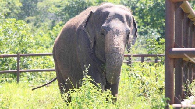 Vítima de maus-tratos, elefanta viaja 2.700 km até santuário no MT