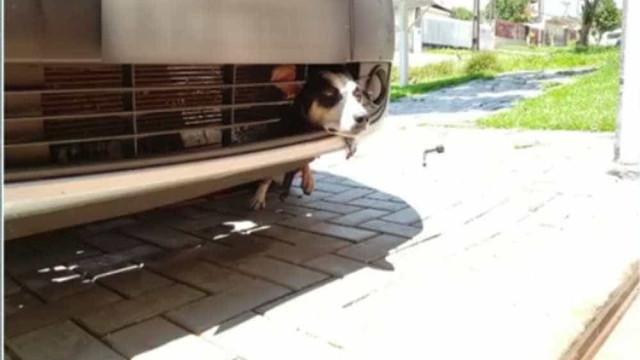 Ao fugir de fogos, cadela viaja 100 km presa a carroceria de veículo