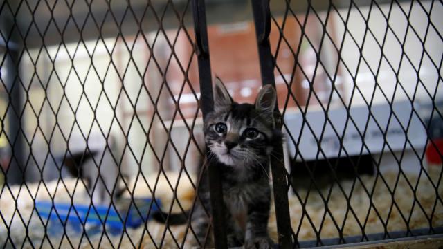 Pet shops da Califórnia só podem vender cães e gatos vindos de abrigos
