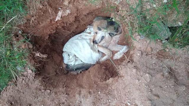 Idoso é flagrado enterrando pastor alemão vivo em SP