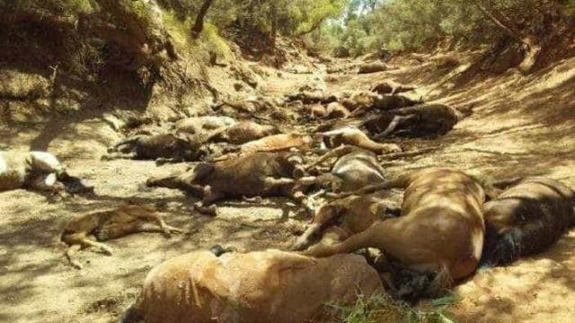 Dezenas de cavalos morrem na Austrália após temperatura bater quase 50º