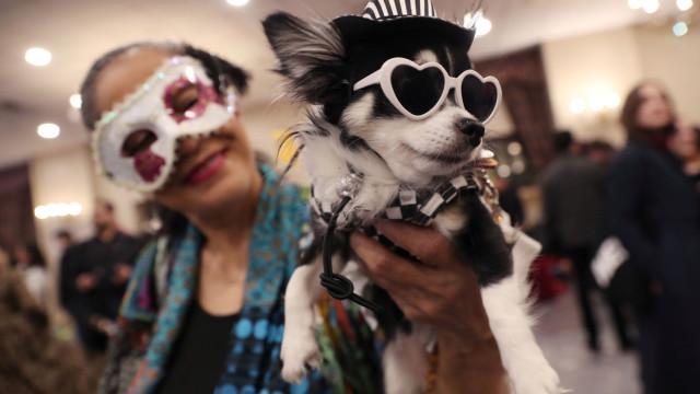 Em Nova York, os cães também tiveram direito a desfile de moda