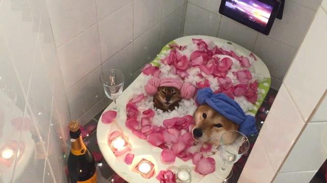 Cão e gata dividem momento de spa romântico