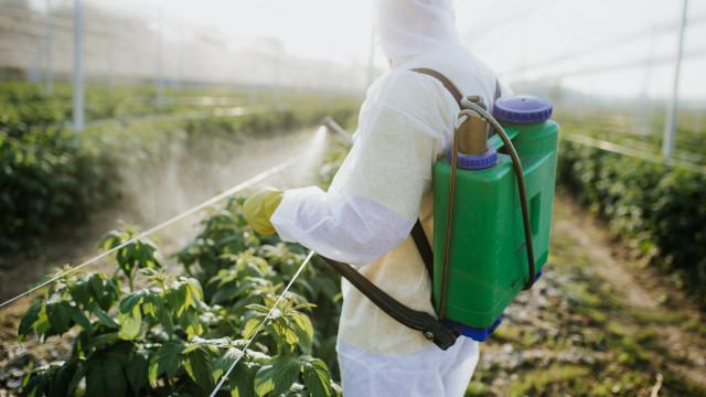 IBGE: um terço dos estabelecimentos agrícolas declara usar agrotóxicos na lavoura