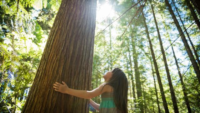 Dia Mundial da Terra: seis hábitos para proteger o ambiente