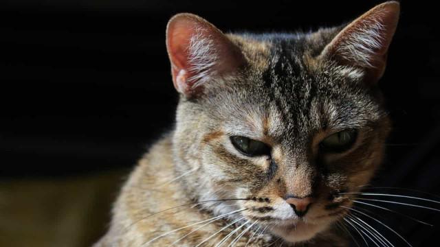 Justiça decide que casal separado terá guarda compartilhada de gato