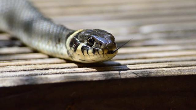 Homem abre porta de casa e é mordido na cara por uma cobra