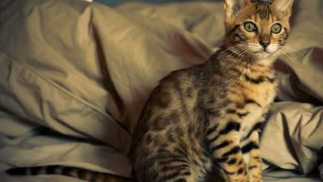 STJ decide que condomínios não podem proibir animais
