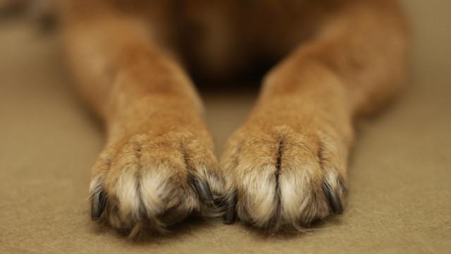 Cão morre trancado no porta-malas enquanto dono fazia compras
