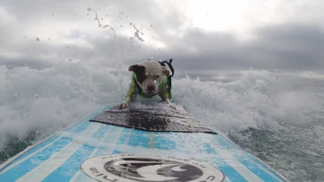 Brasil dá show no skate e no surfe com cinco medalhas nos Mundiais