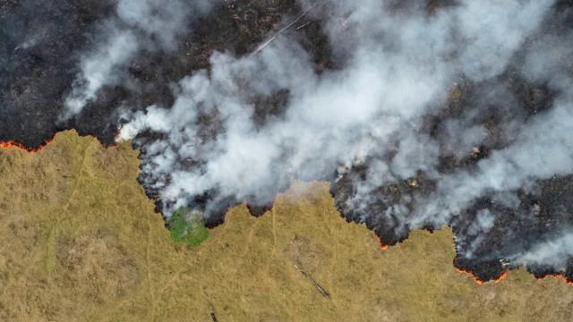 PF buscas incendiários que combinam por aplicativos ataques à floresta