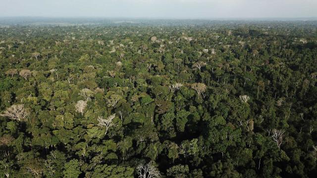 Governo lança campanha publicitária 'Amazônia pelo Brasil'