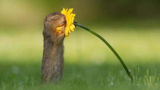 Fotógrafo faz sucesso na internet com imagem em que esquilo cheira flor