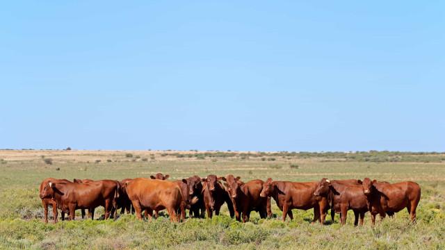Avança negociação entre Brasil e Equador para exportação de boi vivo