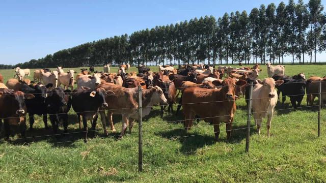 Brasil dirá aos EUA que não vê necessidade de nova inspeção de carne