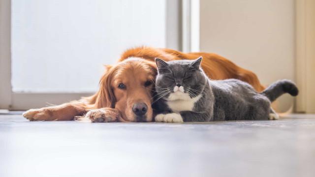Gatos são tão afetuosos quanto os cães, revela pesquisa