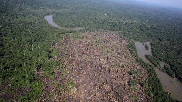População de Manaus avalia que floresta em pé contribui para economia
