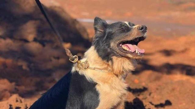 Morre cão responsável por localizar vítimas de Brumadinho e Mariana