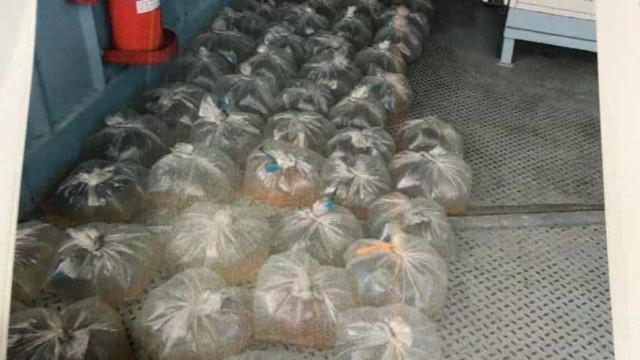 PF prende dois por 10 mil peixes 'ilegais' no Solimões