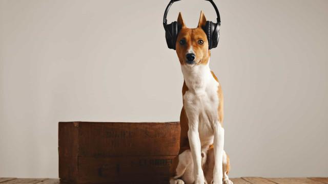 Spotify tem listas perfeitas para cães que ficam sozinhos