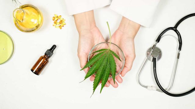 Câncer: Cannabis pode não ajudar na dor, diz estudo