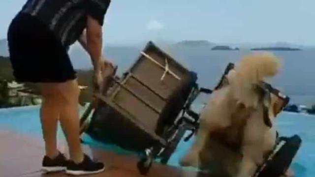 Cão esquece dificuldades e aproveita o dia com um (grande) mergulho