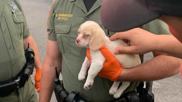 """Polícia deteve homem e seu o """"cúmplice adorável""""... um cachorrinho"""