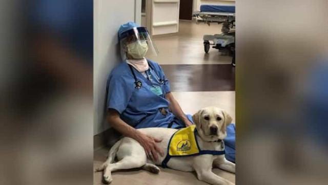 Covid-19: 'Cão de conforto' dá apoio emocional num hospital de Denver