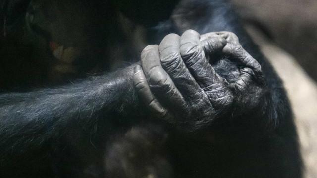 Polícia alemã investiga descoberta de mão e pé de primata em floresta