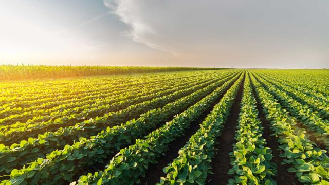 'O agronegócio não precisa da Amazônia', diz ministra da Agricultura