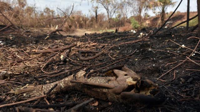 Defesa Civil determina situação de emergência em municípios de MS