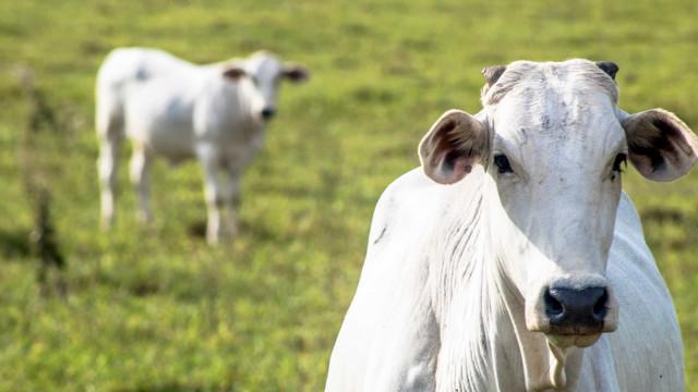 Embargo chinês derruba cotação no campo, mas carne continua cara no prato